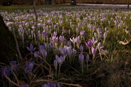 Leipzig, Vorfrühling im Botanischen Garten, am 2. März 2015