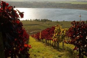 sonniger Weinhang am Geiseltalsee bei Klobikau