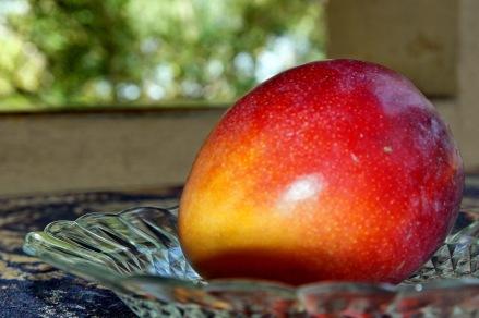So sieht eine reife Mango aus!