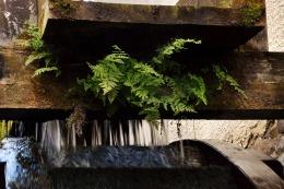 Biotop am Wasserrad der Wassermühle