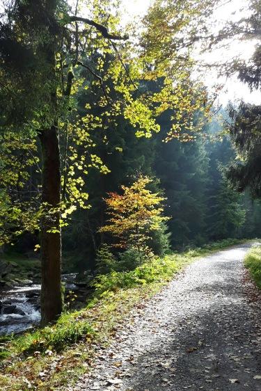 im Schwarzwassertal (Schwarze Pockau)