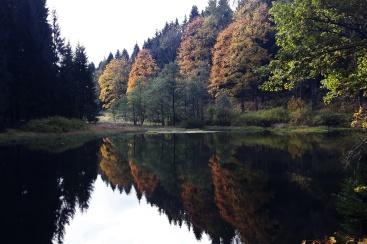 am Schwarzen Teich im Bornwald