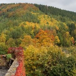 Herbstwald bei Scharfenstein