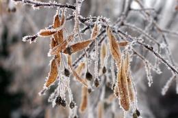 winter17_100