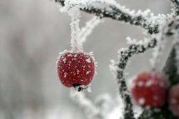 winter17_29
