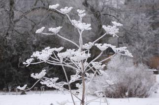 winter17_43