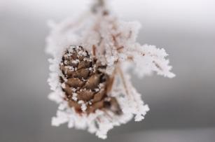 winter17_66