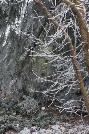 winter17_75