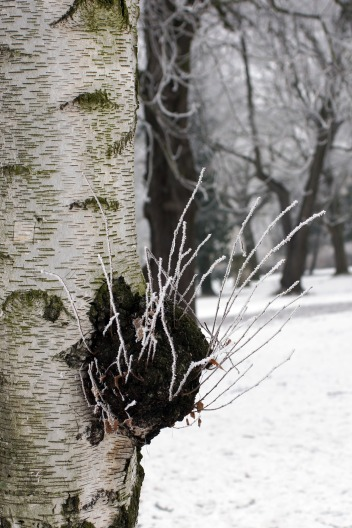 winter17_76