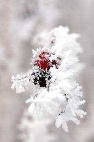 winter17_84