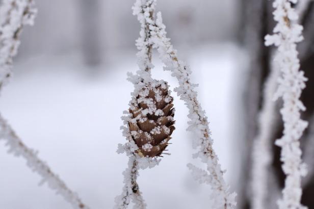 winter17_96