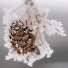 winter17_titel