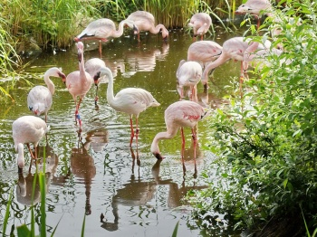 Flamingoteich an der Savanne