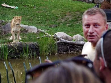 an der Löwen-Außenanlage