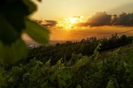 die Sonne neigt sich am Weinberg, dreiviertel Neun