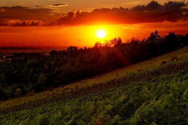 Sonnenuntergang am warmen Sommerabend, mit Weinstöcken und Höhenvieh gegen viertel Zehn