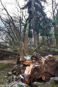 entwurzelte und gekappte Bäume am Spielplatz im Friedenspark