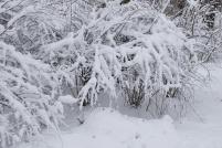 Schneeidyll im Park