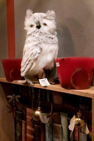 Hedwig ist auch dabei